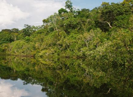 亚马逊雨林的大火 Incendie en Amazonie